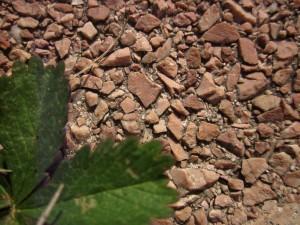 feuilles et sol